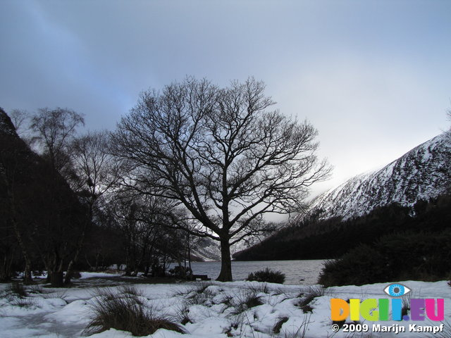 SX02718 Silhouette of tree at Upper Lake Vale of Glendalough