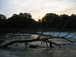 15098 Tree stuck on weir.jpg