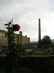 15178 Rose and salts mill.jpg