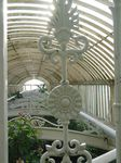 15385 View over tree tops in Palm house.jpg
