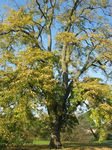 15431 Tree and autumn leaves.jpg