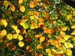15434 Autumn leaves.jpg