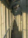 15460 Balcony in the Temperate house.jpg