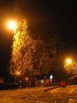 15576 Cone and tree in yellow street light.jpg