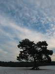 15758 Sky over tree with exposed roots.jpg