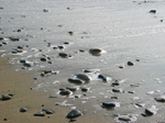 24997 Pebbles on beach.jpg