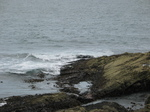 27577 Seal at Slade.jpg