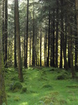JT00846 Light in forrest.jpg