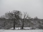 SX02189 Snow on trees in Hilly Fields Park, Enfield, London.jpg