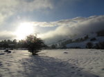 SX02568 Shadow of tree on snow in Wicklow mountains.jpg