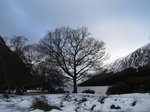 SX02718 Silhouette of tree at Upper Lake Vale of Glendalough.jpg