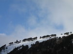 SX02795 Blue sky over trees on snowy Camaderry mountain.jpg