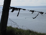 SX05156 Little fishing boat through black plastic hanging from barbed wire.jpg