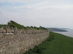 SX05244 Hedges shaped by the wind on cliffs by Southerndown.jpg