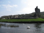 SX05343 Three swans by Ogmore Castle.jpg