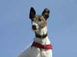 SX05705 Henry the dog with ears.jpg