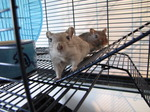 SX05958 Colin and Hendrix the Gerbils.jpg
