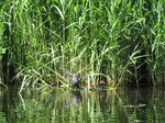 SX06198 Coot with chicks.jpg