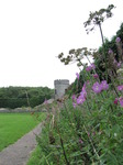 SX08045 Dunraven walled garden tower framed by pink flowers.jpg