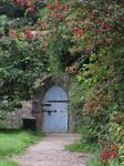 SX08056 Blue wooden door of Dunraven walled garden framed by red Fuchsia flowers (Fuchsia magellanica).jpg