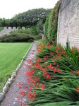 SX08058 Red flowers in border by stone wall.jpg