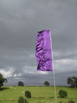 SX08363 Bright purple flag against gray clouds.jpg