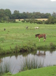 SX08655 Horse refelected in Ewenny river.jpg