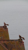 SX08784 Dragons on top of roof of Newquay house.jpg
