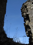 SX09370 Long grass growing on window in Restormel Castle.jpg
