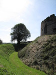 SX09379 Tree by moat Restormel Castle.jpg