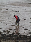 SX09962 Man digging for bait on The Mumbles beach.jpg