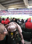 SX10786 Hutch at rugby Wales vs Argentina in Millennium stadium.jpg