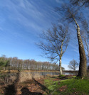 SX12725-12729 Birch trees by Groot Zeilmeer, Uddel.jpg