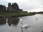SX13175 Swans at Ogmore castle.jpg