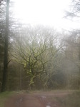 SX13221 Trees through misty lens.jpg