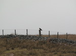 SX13239 Buzzard sitting on post.jpg