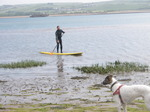 JT00934 Henry looking at Brad stand up paddling (sup) on River Taw estuary.jpg