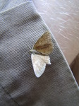 SX14924 Brown butterfly on trousers.jpg