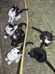SX14990 Young kittens looking up.jpg