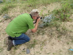 SX15833 Peter photographing Sea Holly (Eryngium maritimum).jpg