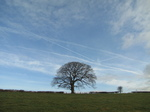 SX17167 Tree with blue sky.jpg