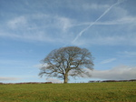 SX17180 Tree with blue sky.jpg