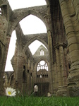 SX17803 Daisy in Tintern Abbey.jpg