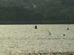 SX18861 Grey heron flying over Lago di Annone.jpg