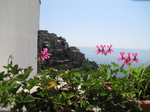 SX19662 Flowers and houses in Corniglia, Cinque Terre, Italy.jpg