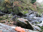 SX20933 Ghost of Wouko at Conwy Falls in Fairy Glen near Betws-y-Coed, Snowdonia.jpg