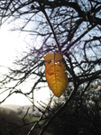 SX20955 Yellow leaf on tree.jpg