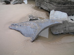 SX21124 Remains of metal rudder.jpg