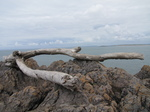 SX22664 Tree trunk beached.jpg