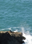 SX24801 Seal in sunshine on rocks.jpg